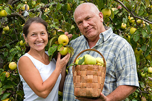 Two people with basket of apples